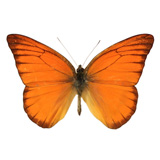 blogshot-butterfly