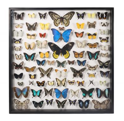 blogshot-framedbutterflies